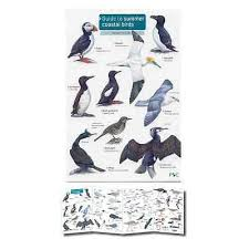 Field Guide To Summer Coastal Birds Laminated Identification Chart Poster Sea 9781908819147 Ebay