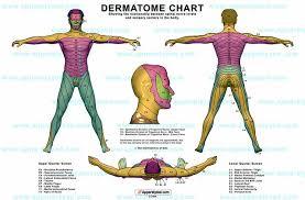 Dermatome Chart 1yandellover1 Flickr