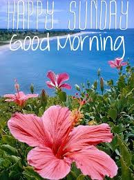 Happy Sunday Good Morning Quotes Best Of Tropical Happy Sunday Good Morning Quote Pictures Photos And