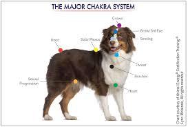 Animal Chakra Chart Healing And Balancing Your Dogs Chakras Animal Wellness