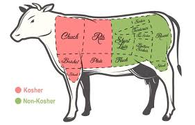 Cow Parts Chart Kosher Meat Questions Answered The Forward