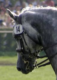 Double <b>bridle</b> - Wikipedia