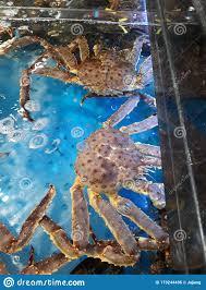 Big Size King Crab In Coner. Fresh ...