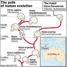 Human Evolution Chart Species Anth 2150