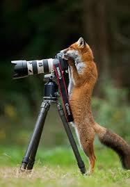 Photos drôles où touchante de toute animaux autres que les ânes ! Images?q=tbn:ANd9GcSTLgIV55BWjcQ9JnRExWiy5Lj64Xf8fmgIf-5x4C-zXhrHw87z4A