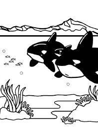 Small Picture Two Killer Whales Orca on Hunting Coloring Page Download Print