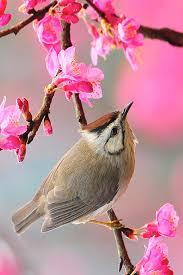 bird iphone wallpaper free1 beautiful spring wallpaper