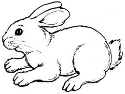 Small Picture Bunny Coloring Pages Art Galleries In Rabbit Coloring Pages Free