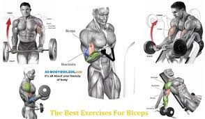 The Best Exercises For Biceps Best Exercise For Biceps