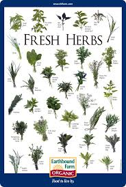 Printable Culinary Herb Chart In Case You Want To Know What It Looks Like Medicinal