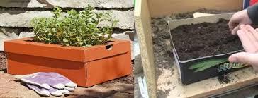 box garden. Shoe Box Garden