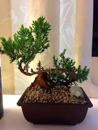 office bonsai. Remarkable Office 1 Bonsai Room Desk Tree I