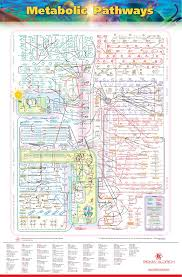 Iubmb Nicholson Metabolic Pathways Chart