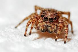 closeup of spider on blanket in how to get rid of spiders naturally