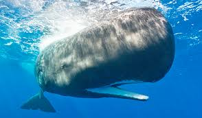 Image result for Moby-Dick