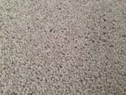carpet offcuts. beige / stone carpet offcut offcuts n