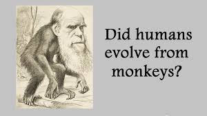 charles darwin theory of evolution did we evolve from monkeys  charles darwin theory of evolution did we evolve from monkeys science education online