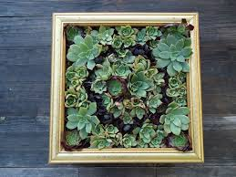 classy succulent wall hanging decoration ideas art kit frame terrarium for succulents artificial diy ceramic