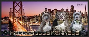 xl bully pitbulls puppies for l american bully breeder xtremebully extra large