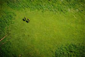 grass field aerial. Nature Forest Grass Plant Field Lawn Meadow Sunlight Leaf Hill Flower Moss Green Soil Aerial Terrain R