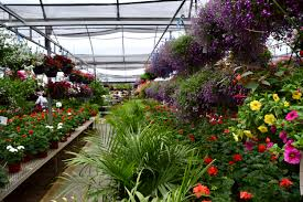 a plant nursery near dayton full of gems stockslagers greenhouse and garden center
