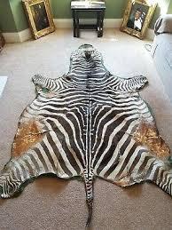 real zebra skin rug uk large hide taxidermy interior design brown