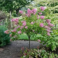 zone 6 shrubs vines