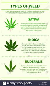Indica Sativa Hybrid Chart Indica And Sativa Weed Stock Photos Indica And Sativa Weed