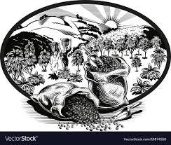 coffee plantation illustration. Plain Coffee And Coffee Plantation Illustration O