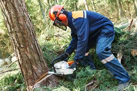 signs it s time to cut down your tree grinders tree services