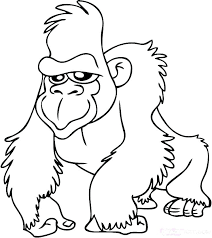 Rainforest Animal Coloring Pages Drawn Tropical Amazon Sheets