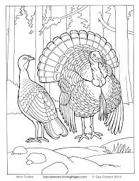 turkey coloring pages best turkey art images on wild turkey wildlife art turkey coloring pages animal