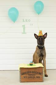 Dog Birthday Decorations 17 Best Ideas About Dog First Birthday On Pinterest Doggie