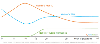 Normal Tsh Levels Chart For Child Tsh Levels During Pregnancy Chart Detailed Thyroid Normal