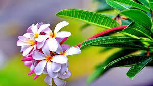 Flowers, - Flower Nature Wallpaper Hd ...