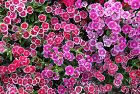 Small Picture Best Perennial Flowers Ideas for Easy Perennial Flowering Plants