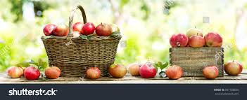 green and red apples in basket. red apples in a basket on wooden table green background, banner and
