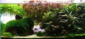 15 5 aquarium fertilizing
