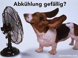 Abkühlung Gefällig Hitze Bild 24697 Gbpicsonlinecom