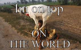 I'm on top of the world - quickmeme via Relatably.com