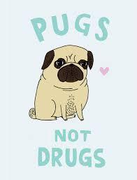 Καλύτερα να έχεις Pug...