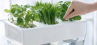 just because it s not the right season or you have limited space it doesn t mean that your gardening must be put on hold a hydroponic system allows you to