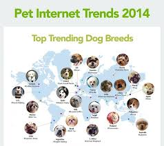 Most Popular Pets Which Dog Breed Is Most Popular In Your Country Animal