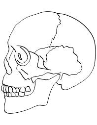 skull bones coloring pages