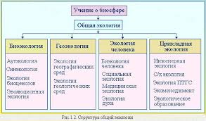 Реферат Экология Определение и содержание Реферат Экология Определение и содержание