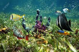 Aquatic ecosystem foto royalty free immagini immagini e archivi