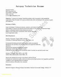 Sap Sd Fresher Resume Format Luxury Resume Templates Myspainholidays