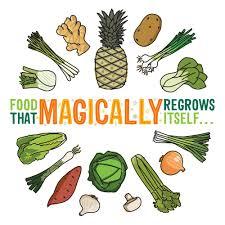 Kitchen Scrap Gardening Food That Magically Regrows Itself From Kitchen Scraps Jerry