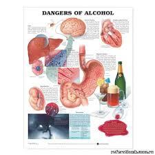 Влияние алкоголя на организм человека ОБЖ Презентации  В организме