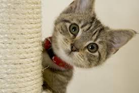 kitten king